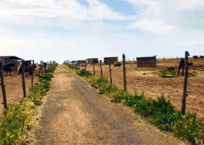 Les paddocks avec abris du Centre équestre Écurie de la Serre